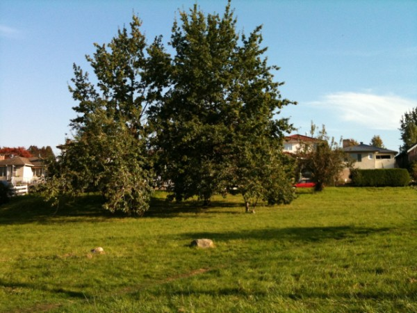 Copley Community Orchard 2011 2