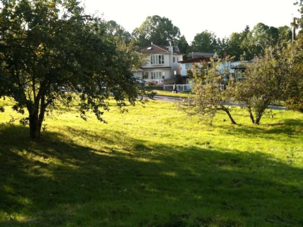 Copley Community Orchard 2011 4