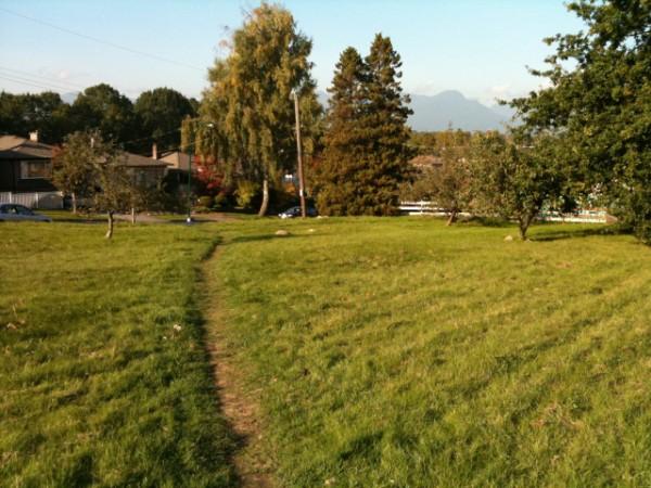 Copley Community Orchard 2011 5