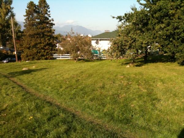 Copley Community Orchard 2011 6