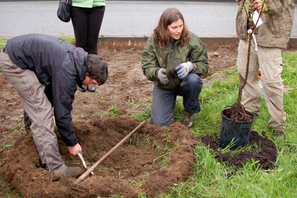 Copley Community Orchard 2012 5