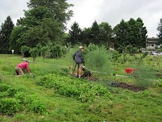 Copley Community Orchard 2014 1